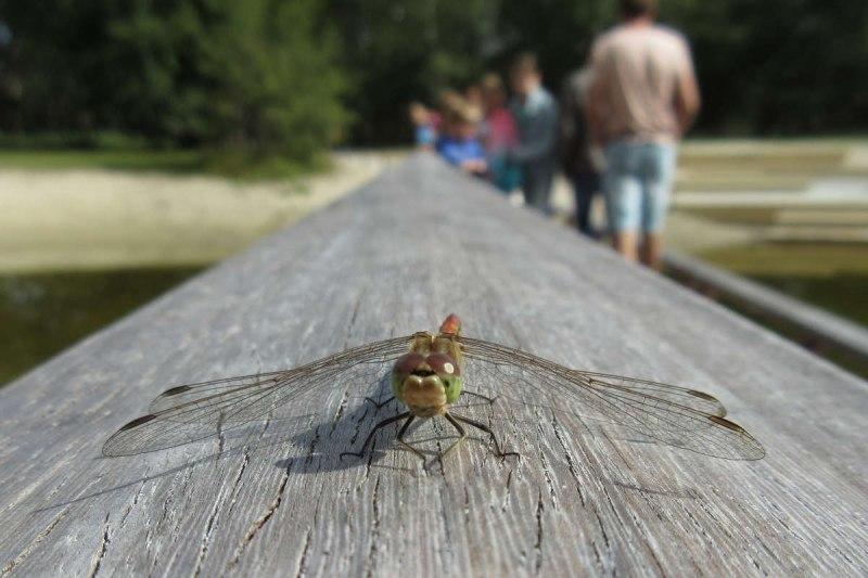 ©John Stratton - Dragonfly runway