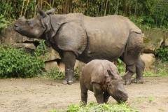 IMG_0108-Blijdorp-Rhino-mother-and-baby