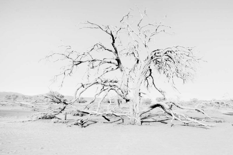 ©Lex Scheers - Death Tree, Death Valley