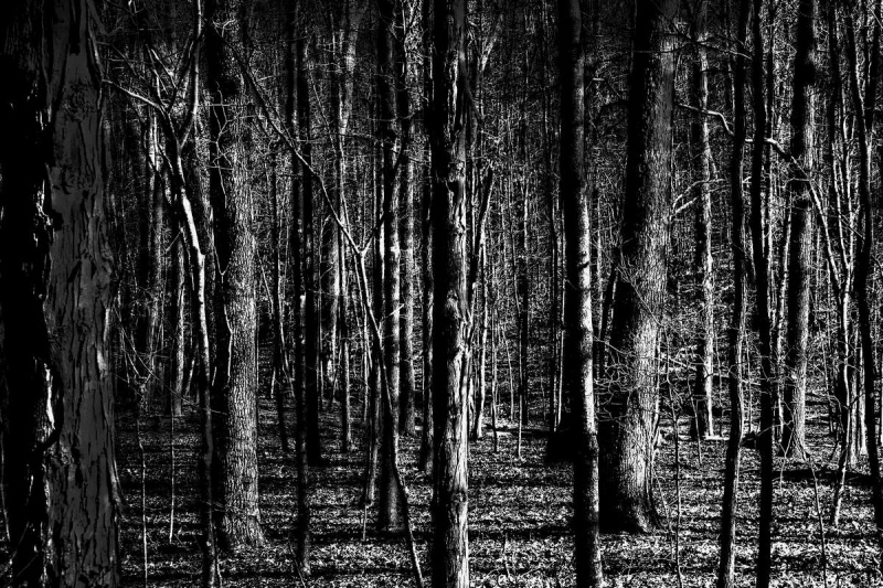 ©Lex Scheers - Rhythm of the forest