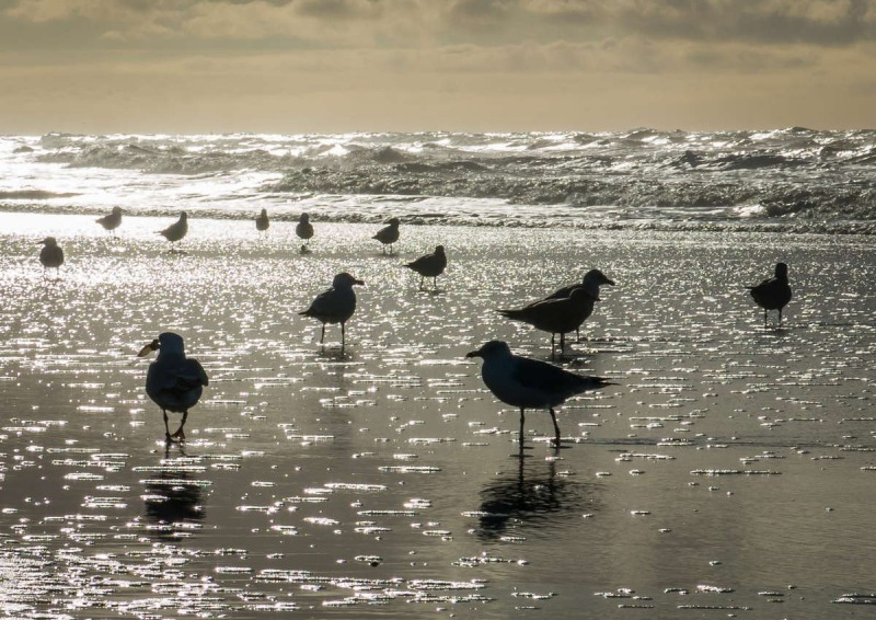 ©Erik Korner  - Browsing icy tides