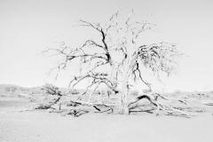 ©Lex Scheers - Death Tree, Death Valley