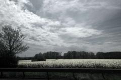 ©Timco van Brummelen - On the road 01