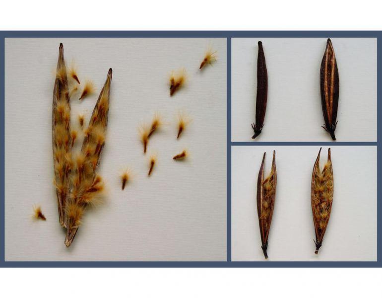 ©Susanne Engelhardt - Triptych Seeds